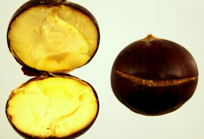 roasted_chestnut-671×460